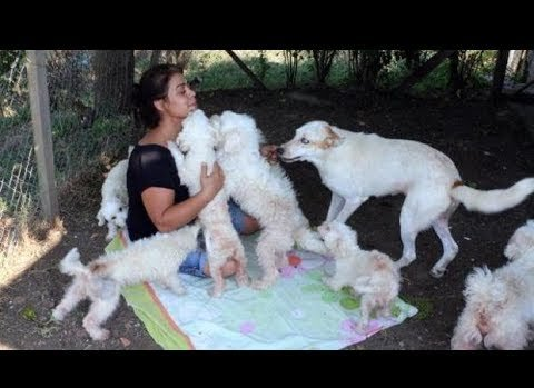 Dağ evinde 100'den fazla kedi köpeğe bakıyor