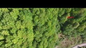 Ormanlarda Bahar Güzelliği