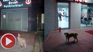 5 gündür sahibini bekleyen köpek kayıp